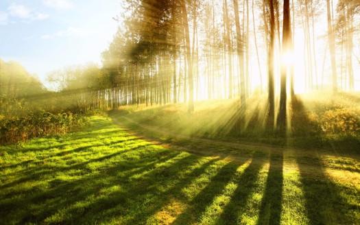 Sun-Shing-Through-Spring-4K-Wallpaper-1920x1200