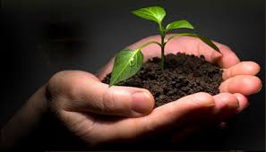 Seede planting